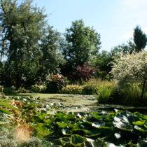 garden_scene1