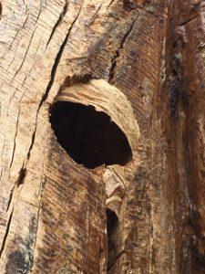 Wasp nest developing at Kingham Cottages